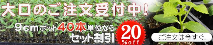 野菜苗の大量購入は苗問屋へ