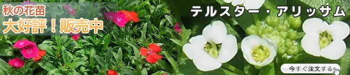 花の苗を期間限定 特価でご注文いただけます