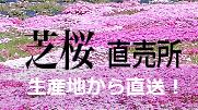 提携先芝桜通販サイト
