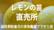 提携先レモン苗通販サイト